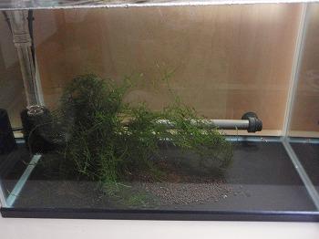 ベアタンク水槽